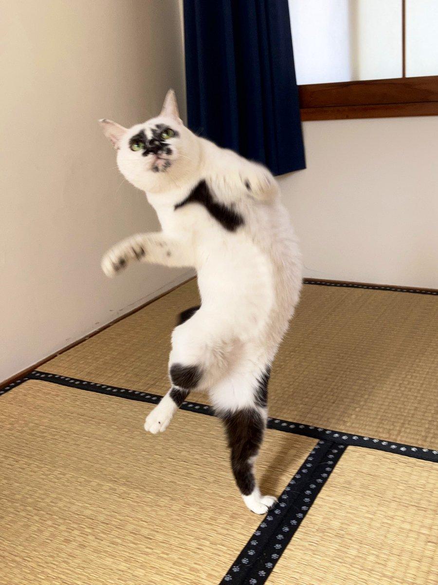 ここまで猫又感出されるとさすがに飼い主も困惑#熱海 #BAR #猫 #Cat