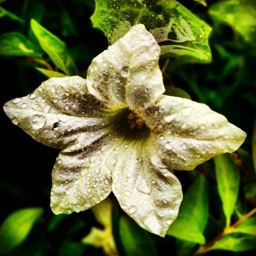 #flowers #naturegreen #NatureForLife #greenry  . . . #photo_phatctory_2019 https://t.co/YbCqRHsPI3