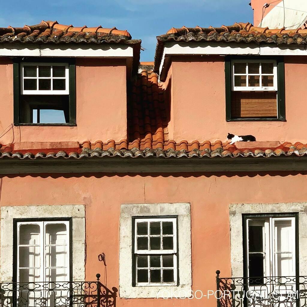 test ツイッターメディア - 屋根の上でリラックスなネコ。 #ポルトガル #リスボン #ねこ https://t.co/n5jdtpRc4j