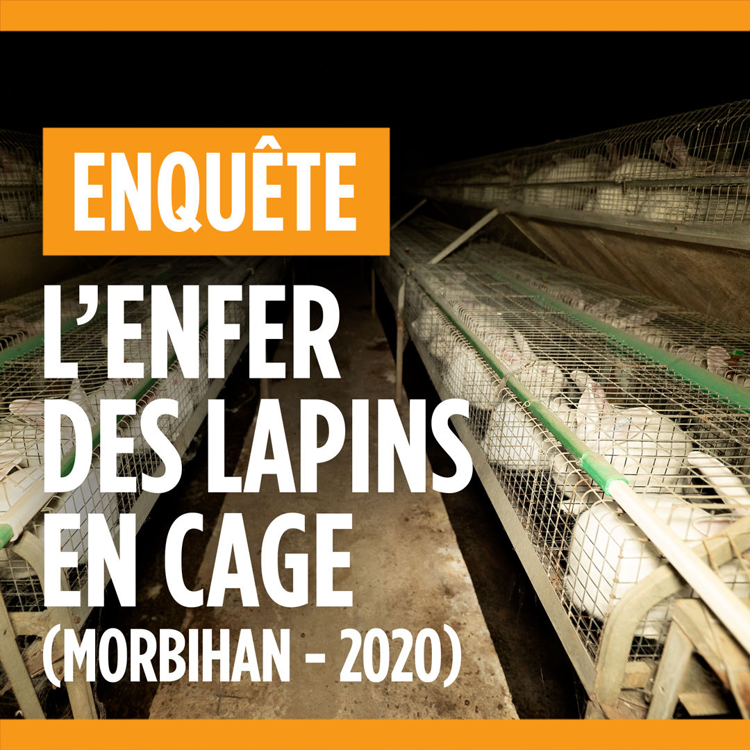 Image for the Tweet beginning: 🚨 NOUVELLE ENQUÊTE 🚨  Comme ces