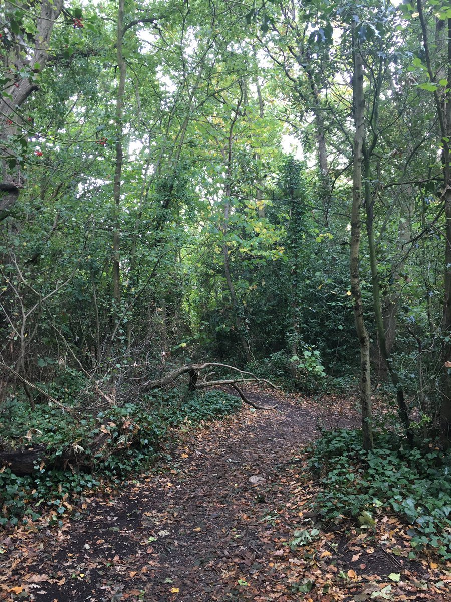 For my #mentalhealth I'm take an hour everyday during daylight hours to walk. Even in London Town there is plenty of nature to refresh my soul #nature #Wellbeing #london https://t.co/q1ly9XdMSH