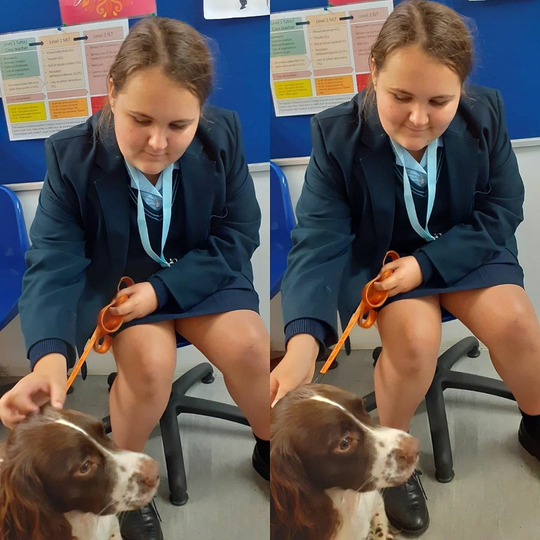 Reposted from @chsg_wellbeing Bringing smiles.... it's what I do 🐶#douglas🧡#teamchsg #wellbeing #wellbeingdog https://t.co/DTbRiSmjS5