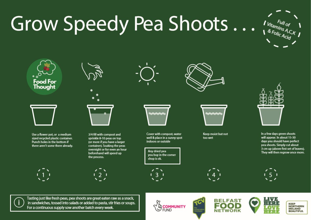 As promised, if you fancy making Belfast Food Network recipe for pasta with pea shoots from Kim, you're going to need some pea shoots!  Really easy to grow, and very fast too; a brilliant and fun thing to do with children of all ages. #growyourown https://t.co/4pifsj7M17