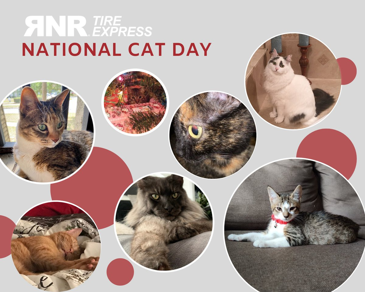 Rnr Tire Express On Twitter Happy National Cat Day From All The Kitties At Rnr Tire Express Catday Nationalcatday