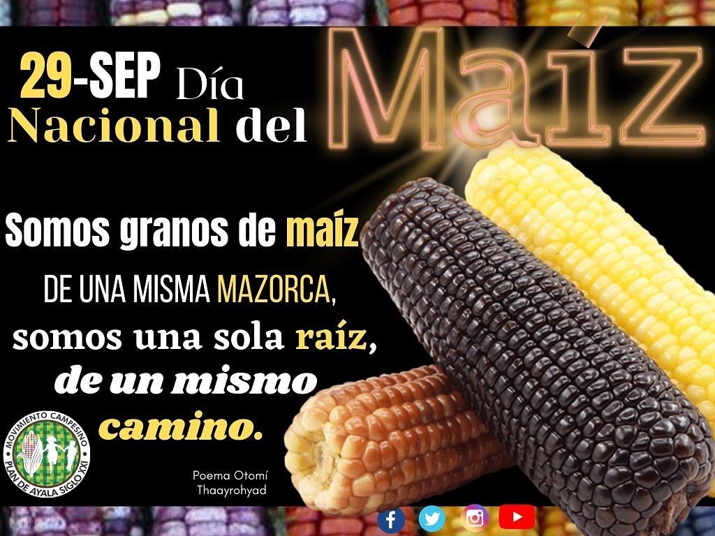 #DíaNacionalDelMaíz🌽| Elotl en náhuatl, #maíz🌽 en el mundo; para #México  identidad nacional. 🌽🇲🇽  Únete al  Seminario Virtual para celebrar #Elmaíz. 🗓️28 de septiembre 2020 ⏰15:30 hrs. 💻 https://t.co/yqG48ypL2l y https://t.co/DzVXlvmi91 https://t.co/lKLEC3aztQ https://t.co/ZqgTdylpkJ