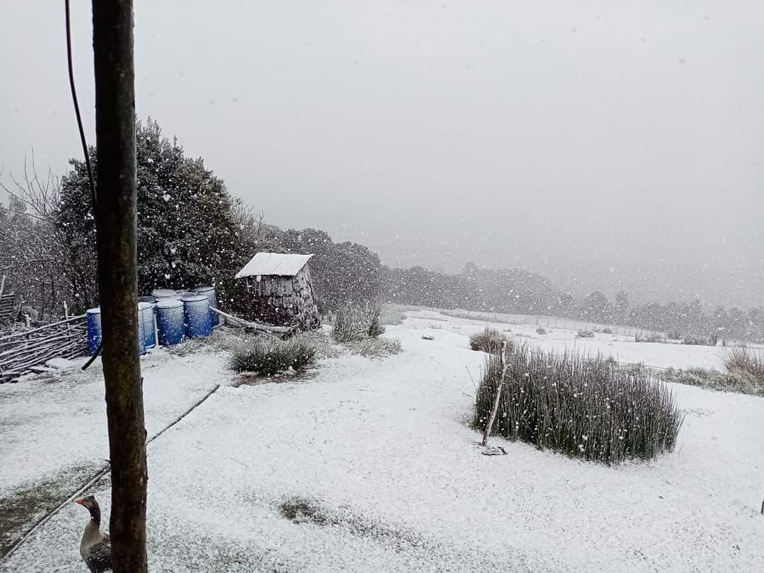 RT @BorquezRafael #Chiloe #Chonchi, nos envian esta hermosa postal de la caida de nieve en el sector de Nalhuitad sector rural de la ciudad de los 3 pisos, @biobio @pera334 @Fernandoborquez @canal7chonchi @canal7chonchi @BethoCarcamo @condorsei @MetDalcahue @AguiladeCastro