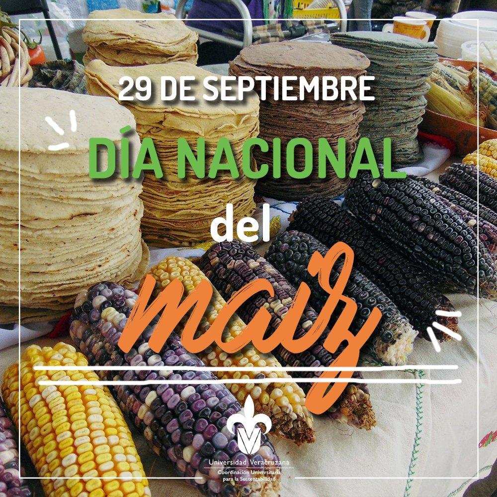 🌽 El maíz no sólo forma parte de la gastronomía de México, también es fundamental en la cultura y cosmovisión de los pueblos indígenas y campesinos; es símbolo cultural de identidad y sustento comunitario.  🌱 Sin maíz, no hay pais 🌱  #DíaNacionaldelMaíz https://t.co/PQuWHfioz9