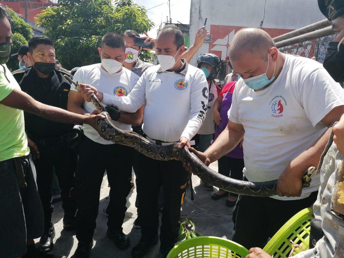 test Twitter Media - Los Bomberos Voluntarios localizaron una serpiente en el motor de un vehículo en la 13 calle y 5a. Avenida de la zona 1. Posteriormente fue trasladada al Zoológico La Aurora. https://t.co/QPrpqiK9W4