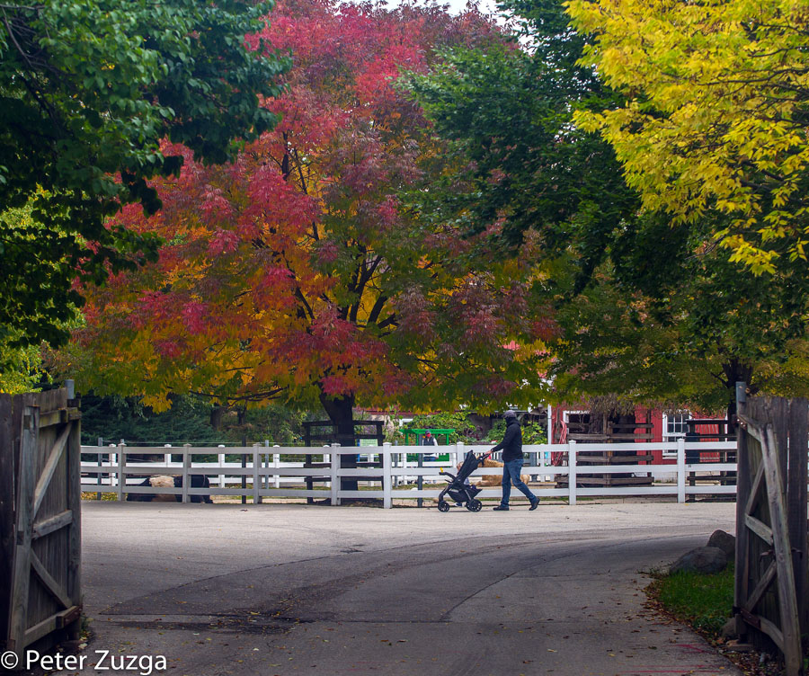 It's starting to look very fall like at the Milwaukee County Zoo today. #fallcolors #fall #wiwx #Weather #Milwuakee #Wauwatosa #Wisconsin #Zoo #tourism https://t.co/jINReu9thm