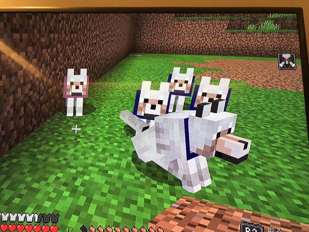 とみーのマイクラ日記 1日目 今日は久しぶりにマイクラをしゅんとやりますた!! 鉄の牙(ペット)も可愛いし 整地もある程度できた、また明日も頑張ろーっと #Minecraft #とみクラ https://t.co/Bv629r986J