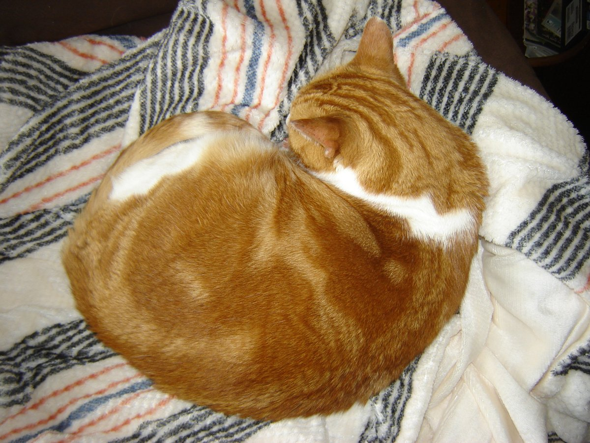 #ZSHQ  @catsrule0 @parham1961 @dora_nlk @BloomNight2 @marisbellamy1 @LindsayPH @LBisaillon @vanessaandcats1 @Palmolive_S_Pan @GailCarangelo @MauSupercat Hiyah all. Me giving you nice #cinnamincroissantTuesday.  Hope you have a great day. Loves you all. Huggies🤗😸😁 https://t.co/BSLeKc1Pfg