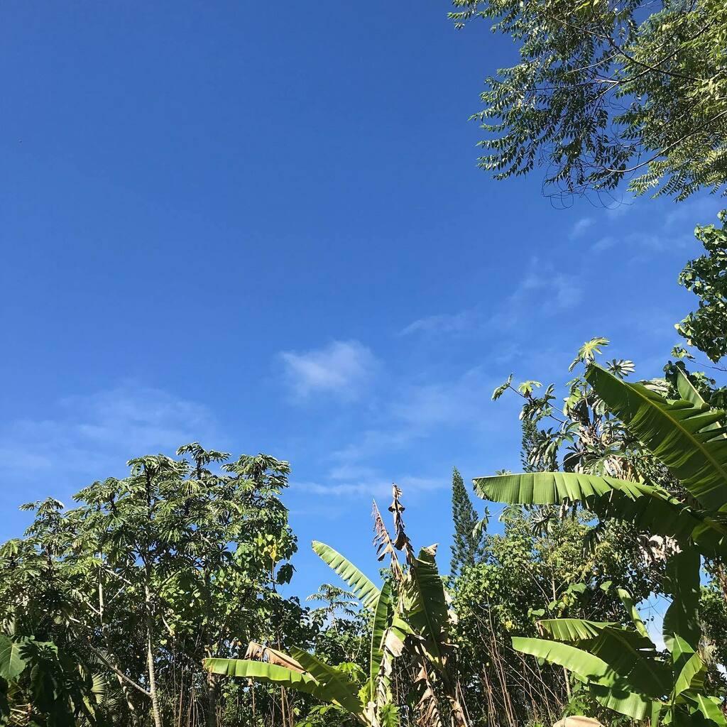 9/29/20 27℃ #aloha #おはよう #ハワイ #ハワイ島 #ハワイ暮らし #朝空 #空 #イマソラ #goodmorning #hawaii #bigisland #hawaiilife #morningsky #sky #skygram #ig_hawaii #instasky https://t.co/6Lvx09SWO4 https://t.co/zw1x2yuqfe