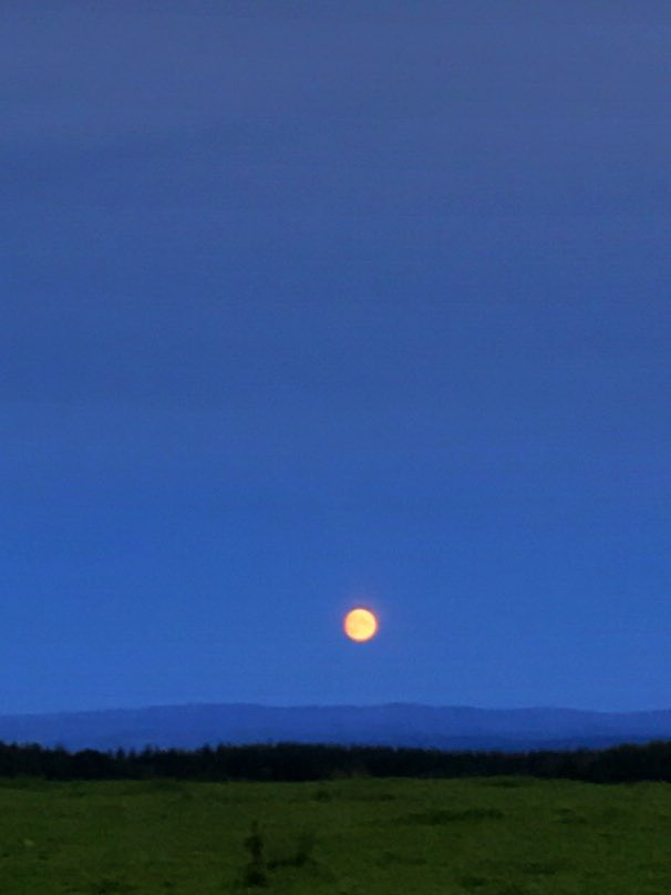 Big orange moon. Big skies. Selkirkshire.  #scotland #scottishborders #dailywalk #lawyer #law #scotslaw #scotslawyer #rural #ruralbusiness #healthcare #nhs #renewables #propertydevelopment #photography #andydrane https://t.co/YPSYzvaJLc