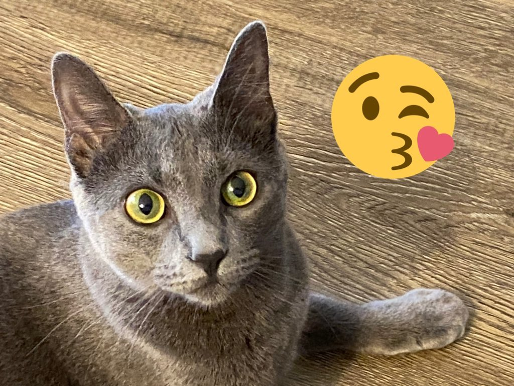9/30 #PurrChoirForLuis @MissytheB Misty hopes all #tuffcats will join her in sending happy healing purrs to Luis and his mom Dianne. They both mean so much to us 🙏🏻🙏🏻 @Tonithecat32 @BloomNight2 @GordonHarmony @Ilovemeowmakers https://t.co/0y7aKZkoj1