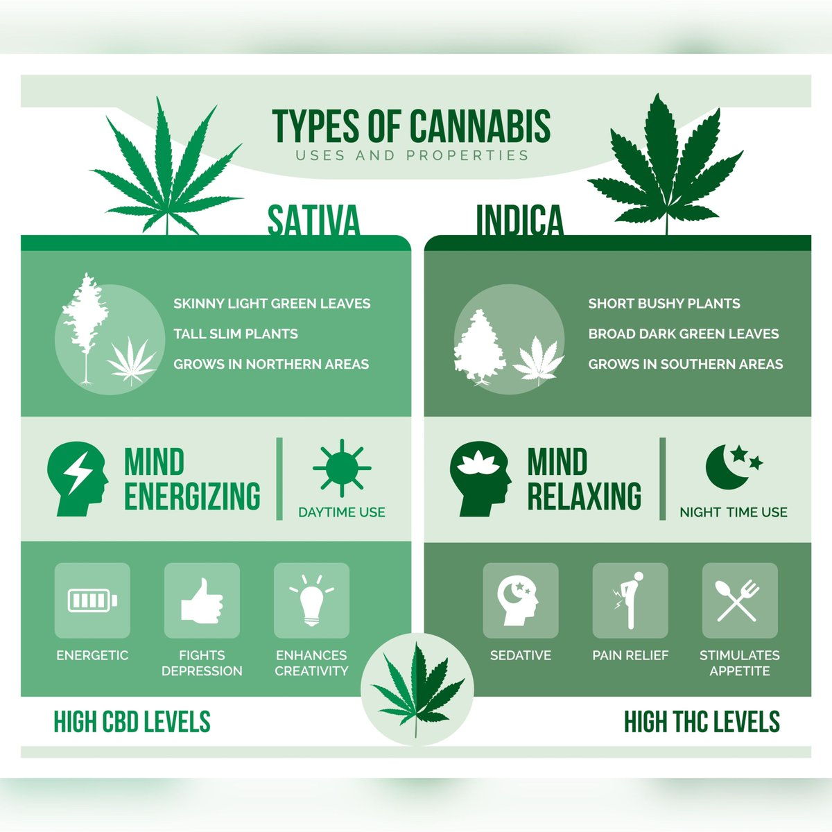 Which one are you picking for today? 🤔  #sativa #indica #cannabiscures https://t.co/KTYgWEo18P