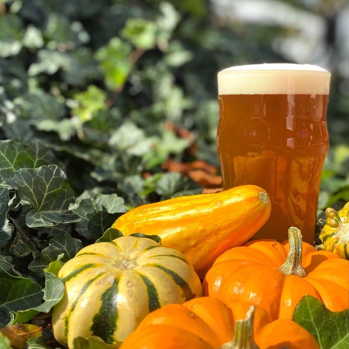 """There's nothing basic about """"Pumpkin Latte,"""" our latest tap creation! This seasonal version of Bean Ball Blonde is made with vanilla, pumpkin pie spice, almond milk creamer, and Fall Harvest Spice Coffee from @FerrisCoffee —try it today! #fallflavors #craftbeer #notbasic https://t.co/4Szes5qcEs"""