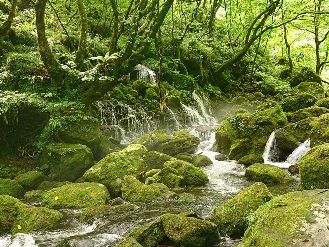#秋田県 #にかほ市 #象潟町 # 本郷 #麻針堰  #元滝伏流水   綺麗でした、水も苔も。 また行きたいけど、遠いですねぇ。  #滝 #水と苔と #waterfall #ヤマハ #wr250r  #オフロードバイク : #バイクで見に行く絶景 #バイク写真部 https://t.co/8decAusMlC https://t.co/1U3DszSO01