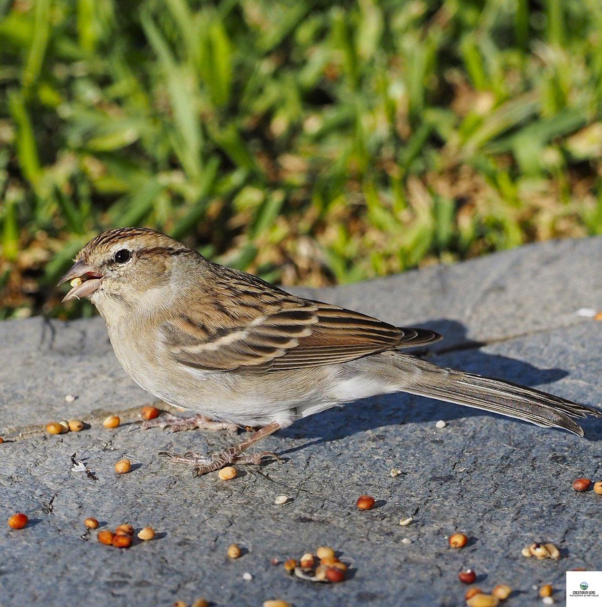 Snack Time! #birdphotography #birdsofinstagram #birdwatching #blackphoebe #wildlife #photographer #photography #wildlifephotography  #birdphotography #macrophotograph #olympusphotography @LensAreLive @ThePhotoHour https://t.co/62u7puYfRk