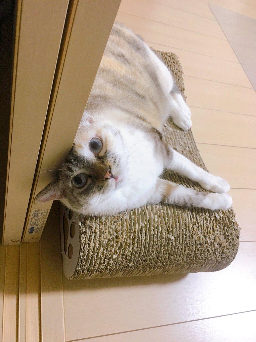 寝ちゃうんだ?ふ〜ん…  #猫 #cats https://t.co/0Mx1s5lSiS