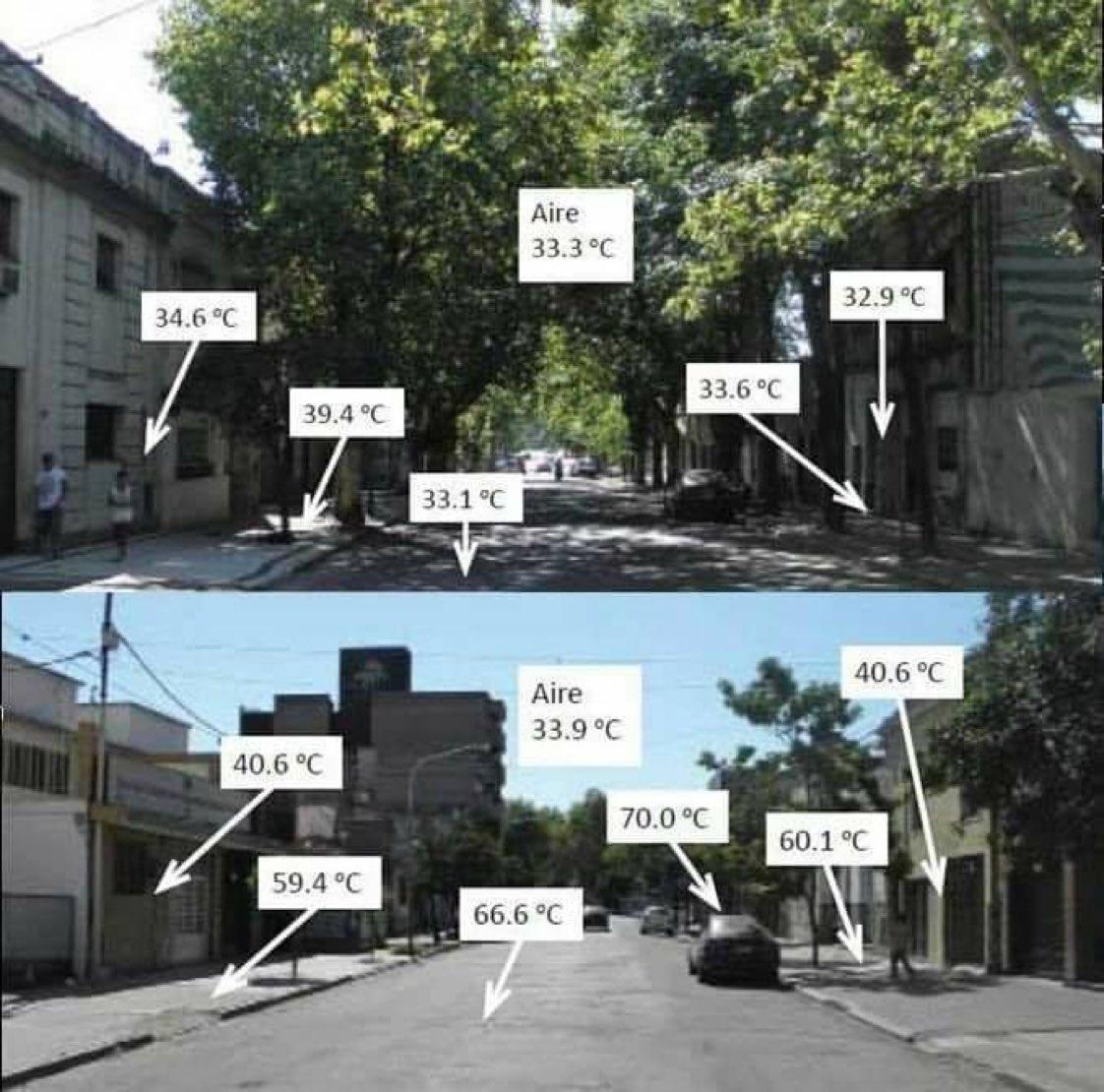 Ağaç deyip geçmeyin..🙏 -Ortalama 66 derecelik bir sıcaklığı, 33 dereceye kadar düşürür. -Yetişkin bir ağaç ortalama 500 kg CO2'yi emer. -Bir ağaç ortalama 4 insanın yıllık oksijen ihtiyacını karşılar.🌳🌳🌳 https://t.co/6A9fIboWLs