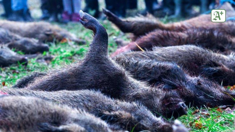 Afrikanische Schweinepest breitet sich in Brandenburg aus https://t.co/uo0CWCjMpo https://t.co/x8v7p2p9NB