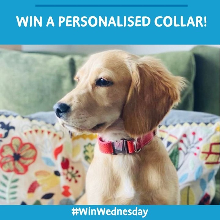 We have teamed up with @handmadebyRYAN to give you the chance to #Win a soft Italian leather leash and collar and a selection of #BarkingHeads Treats. Visit our Instagram page now for your chance to win! https://t.co/Ns99x2RD1N #Competition #WinWednesday https://t.co/RjVxhDDpIV