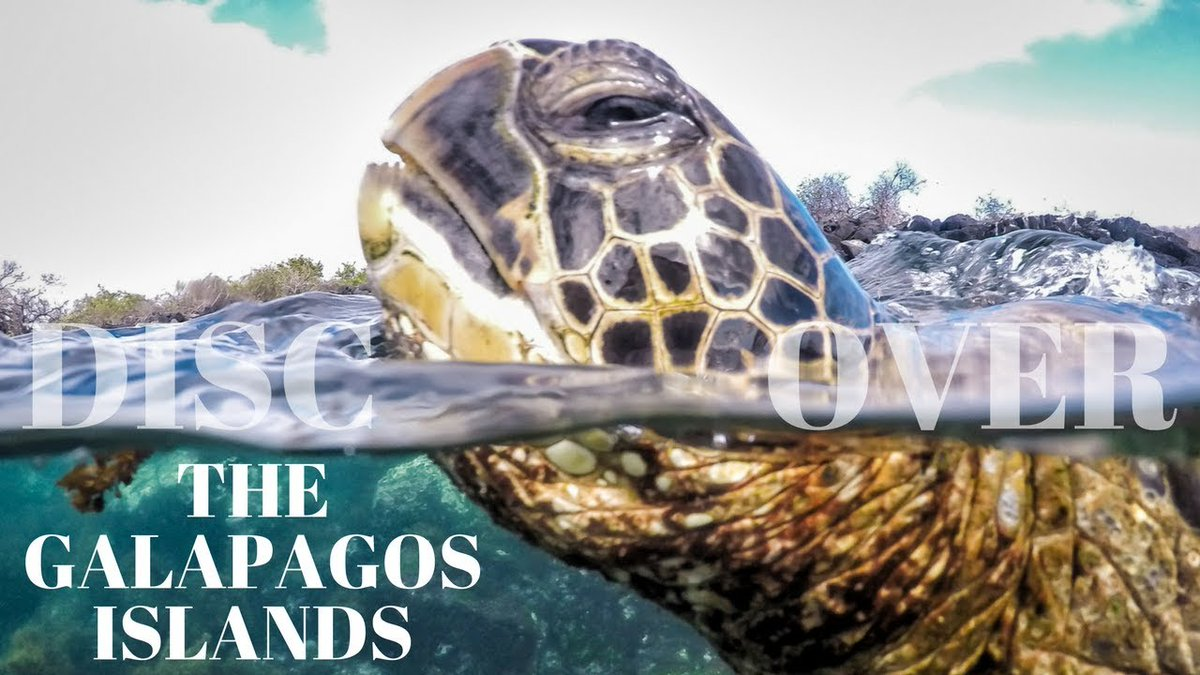 Divergent Travelers visited the #Galapagos #Islands and produced a beautiful 4K video, amazing #wildlife encounters, unique #experiences and of course the best way to see the Galapagos?  #Expedition #Cruising  https://t.co/ZauzgmBrAm  #galapagoscruise #expeditioncruise #galapagos https://t.co/AsXrv36zF5