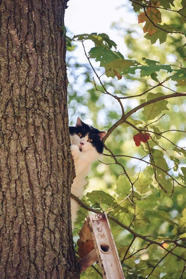 The original series in the classic genre of cat stuck up tree