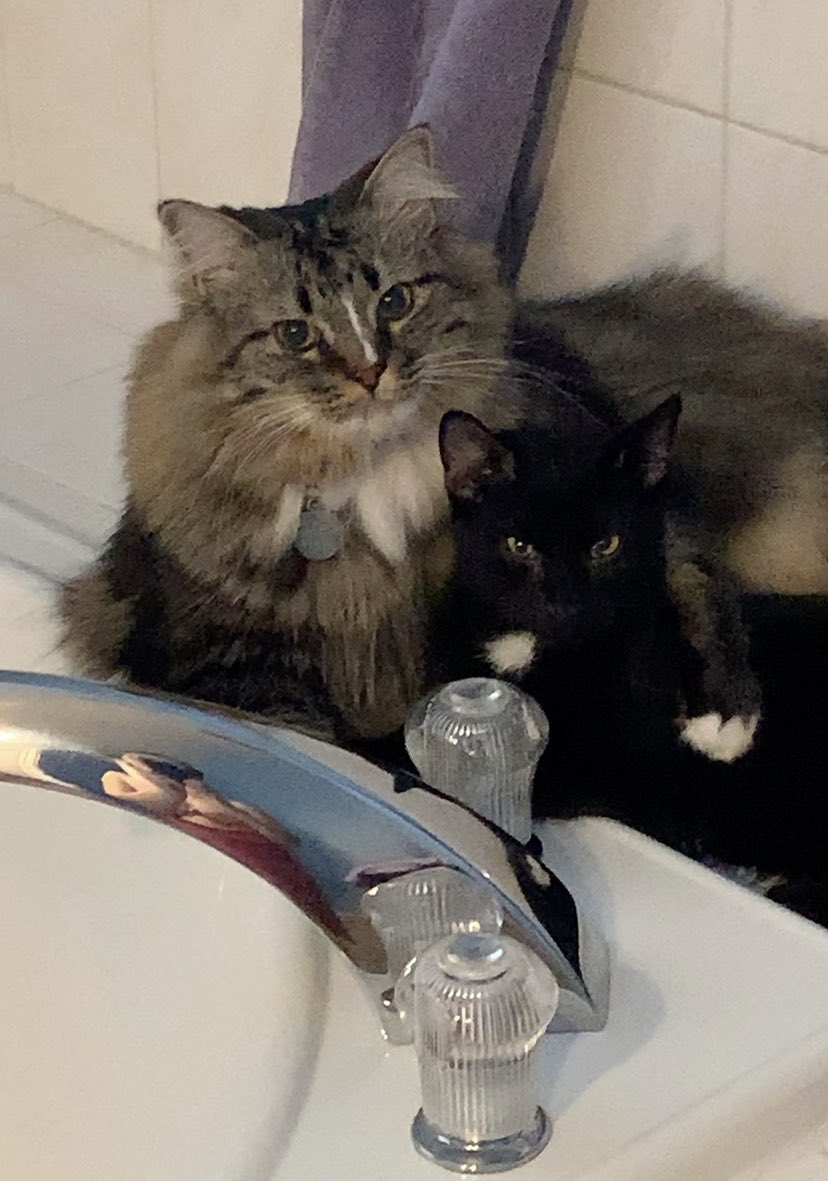 Day 2 We been challenged by @MaineCoonCatsOH to produce a pic a day for 7 days to illustrate our current life (no captions, no people).  Nominate an animal/day, asking to copy these words, add a photo and repeat the challenge. Today We nominate @BerylCoon https://t.co/kvqUUpMGmy