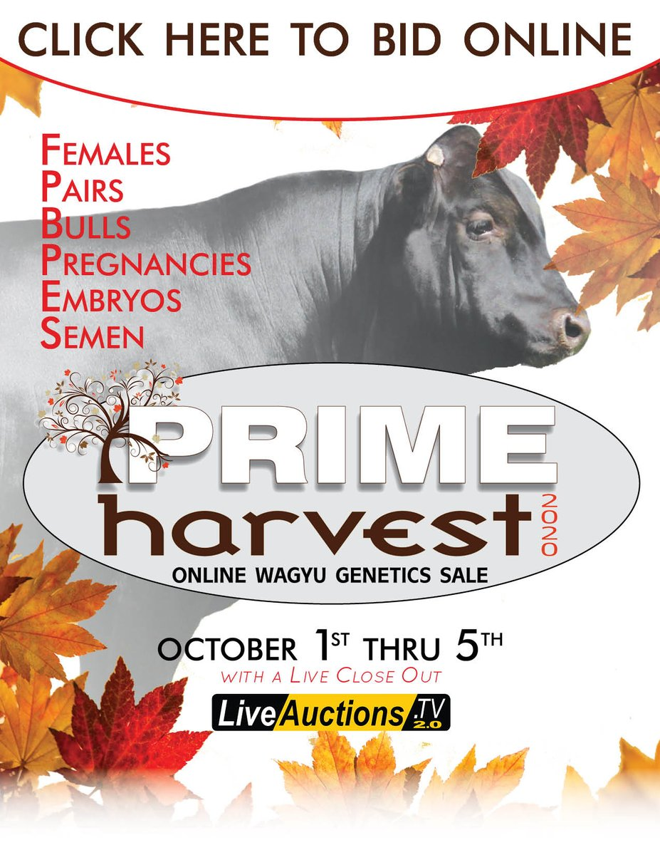REGISTER NOW TO BID ONLINE!!! Click the link to register:  https://t.co/6z89Kp7nAn  #PrimeHarvest #Wagyu #October1-5 #livecloseout #wagyugenetics #liveauctions #females #bulls #pregnancies #embryos #semen #onlinesale #registernow #bidonline #sale #auction #JDA #jdainc https://t.co/rgKbquhL8S