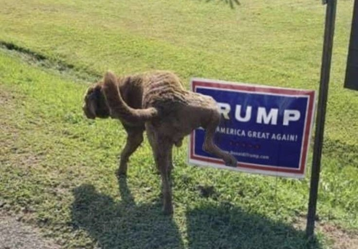 @realDonaldTrump @FoxNews EVERYONE IN MY NEIGHBORHOOD WITH TRUMP SIGNS IN THEIR YARD HAS TAKEN THEM DOWN AFTER TRUMPS UNHINGED MELTDOWN AT THE DEBATE LAST NIGHT. MY SON WHO VOTED FOR TRUMP IN 2016 SAYS HE IS ASHAMED OF TRUMP AS OUR LEADER & WILL VOTE FOR JOE BIDEN.😲 #TrumpIsDangerous #BidenHarris2020