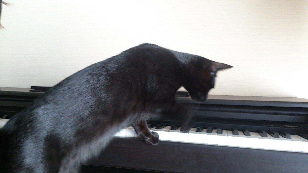 test ツイッターメディア - 今日からまたあつ森頑張りますが、ツナの瞼の腫れが気になるので、夕方ツナを病院に🥺 写真はピアノで遊ぶツナ🤣 https://t.co/OYOLkIRMFS