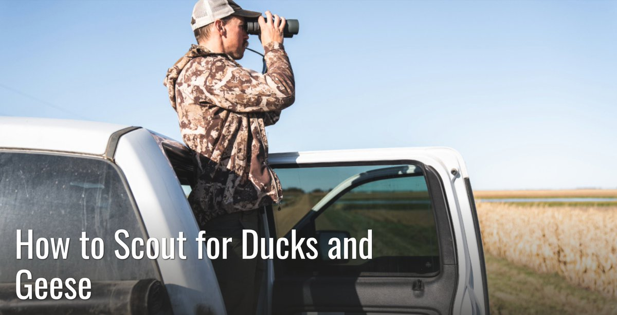 Scouting for ducks and geese is about more than driving gravel roads. Here's how to find the best fields and waterholes for waterfowl this fall. #meateater #fueledbynature