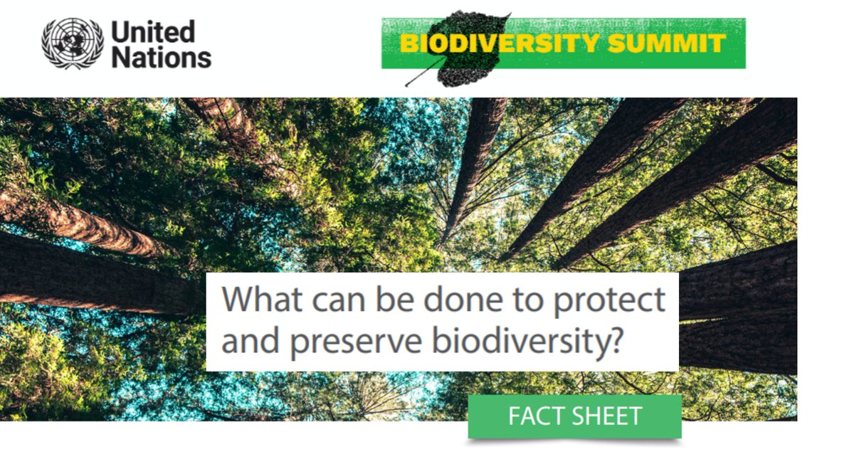 What can be done to protect and preserve biodiversity?  The challenge is a big one. But there are solutions.  Get the facts ➡️https://t.co/9h0wehRzF1  #ForNature #Biodiversity2020 https://t.co/VbtvSeQwjd