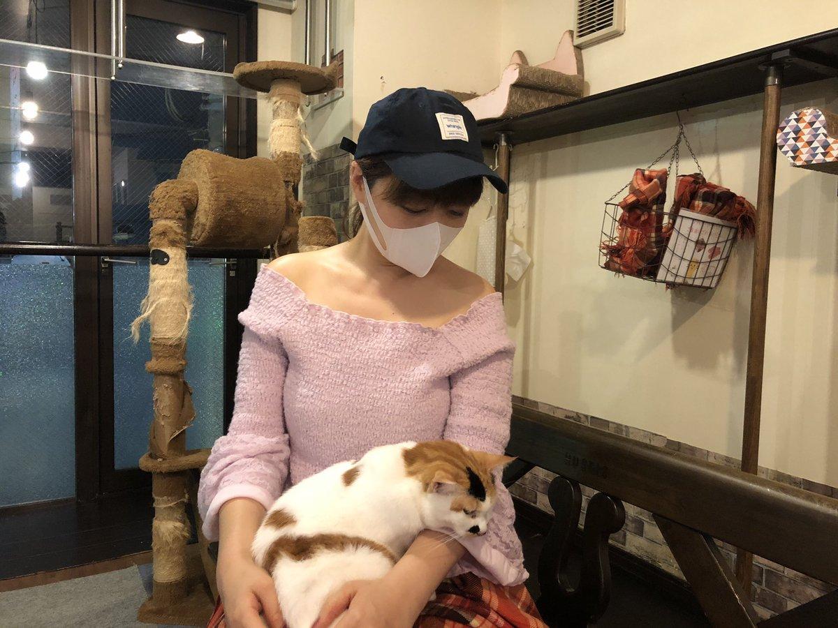 やっと、、 #保護ネコカフェ #ミーシス に会いに行けましたー😿💕 帰り際にお膝に、、、 ぁあぁあー人間をダメにするニャンコたち💕 レポします‼︎ #猫 #ねこ #里親 #CatsOfTwitter https://t.co/jAeItu7gwC