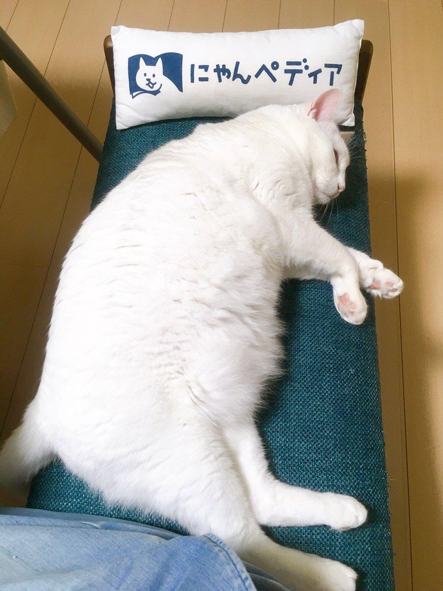 椅子の木の部分を枕にして寝るのは痛かろうとオジサンがクッションを置いてくれたのに頑なに使わない猫。あんた達…オジサンに対する当たりが強くないか(笑)  #猫 #cats https://t.co/ob7xjL2orC