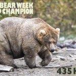 アラスカで毎年開催されているデブなヒグマトーナメントが面白い!