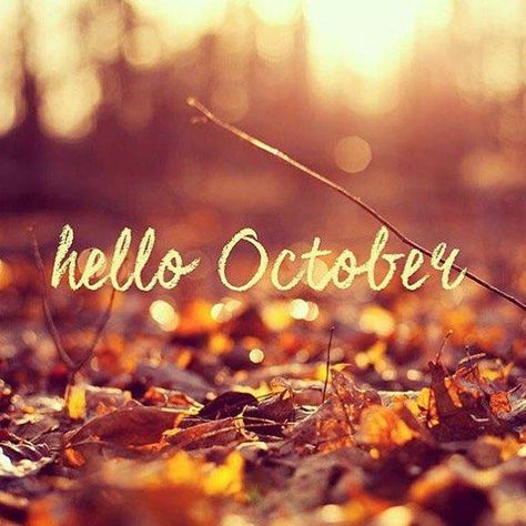 🍂 🎃 🍁 Welcome, October! 🍂 🎃 🍁  What are you favorite October traditions?  https://t.co/NLP9SWLuUn  #STAhappy #SherylNelsonRealtor #KWStAugustine #KellerWilliams #StAugustineRealtors #HelloOctober #Fall https://t.co/eNbUM6qO58