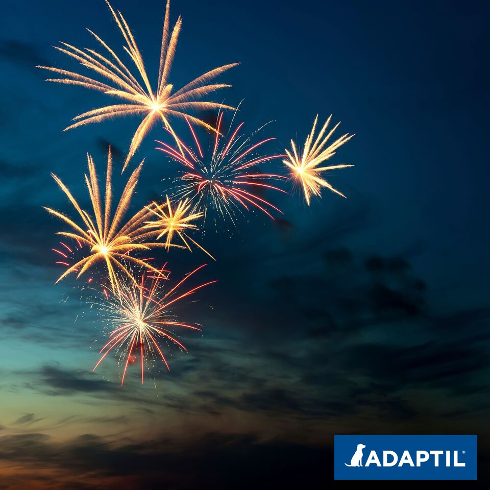 #Fireworks are coming - Its never too early to start preparing! Sound tracks, pheromone sprays, plug ins - What helps your pet? #PetAnxiety #PetRemedy #Adaptil #Feliway https://t.co/PXFblVAKXW