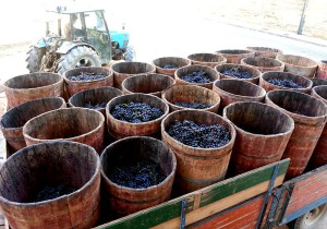 """Sabías que... """"Los comportones"""" son los recipientes de madera con boca circular y de forma troncónica usados para transportar la uva al lagar. Típicos de Rioja, se elaboran con duelas de madera y aros metálicos. Su capacidad ronda los 100 kg. 👍🍷 📷 @Riojatrek #vino #winelovers https://t.co/GmceoLI9m4"""