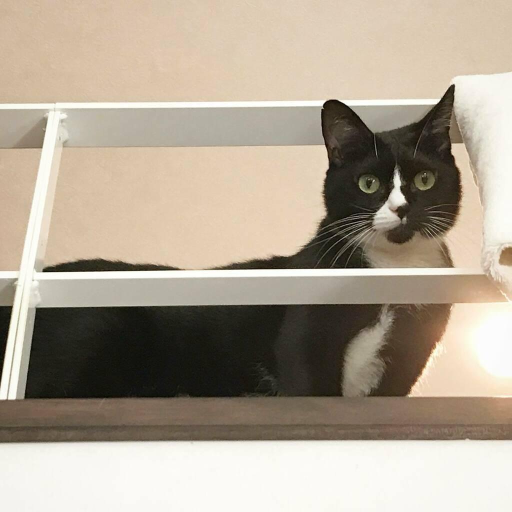 ふと目が合った #はちわれ #猫 #白黒猫 #猫のいる暮らし #ネコ #ねこ #blackandwhitecat #tuxedocat #kawaii #catstagram #catsofinstagram #instacat #ilovecats #ilovemycat #catslover #catlover #mycat #cat #cats #chat #gatto #katze #kitty #cutecat #sweetcat https://t.co/hNpTASqOc3