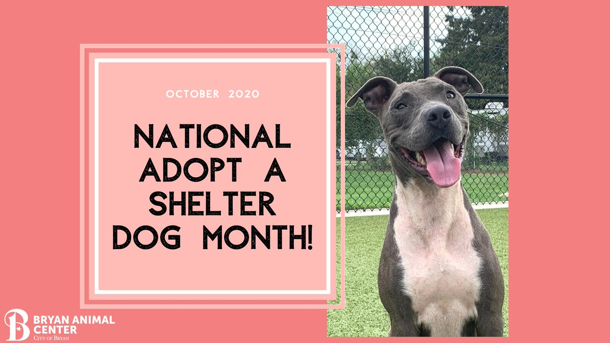 October is National Adopt a Shelter Dog month! If you are looking to add to your family this fall, consider adopting a shelter dog!  #adoptdontshop #adoptashelterdog #AdoptAShelterDogMonth #bryananimalcenter #CityofBryan #adopt #october #adoptadog