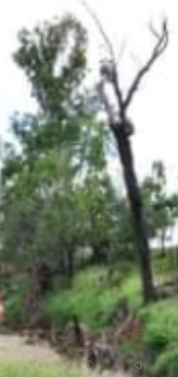 BONE TREMBLING #paranormal in creek bank vegetation at a location in #LockyerValley behind two prime suspects in relation to the murder of #SharronPhillips in 1986 @parachills, @Diane_Dee, @kellysangelo, @spirit_vision, @BeyondTheVeilI1 and @melchizedek1955 https://t.co/BLvsLORQy0