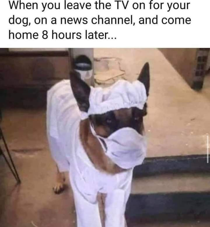 Whatever gets him to pay some rent around here... . . . #gooddog #doctordog #motd #albuquerque #goodmorning #abq #nmtrue #howtopayrent #readyforaction #newmexico #morningmeme https://t.co/V2nJY13Wwn