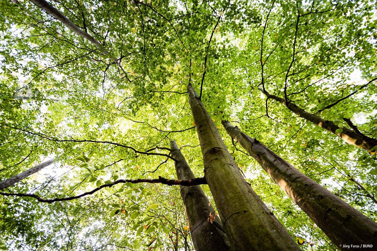 Wir sind zutiefst bestürzt. Die Rodungsarbeiten im #Herrenwald haben begonnen. In Zeiten der #Klimakrise & des #Waldsterbens 2.0 einen gesunden Mischwald für eine Autobahn zu roden, zeugt von einer #Verkehrspolitik von gestern. Wir brauchen eine #Verkehrswende, #KeineA49!