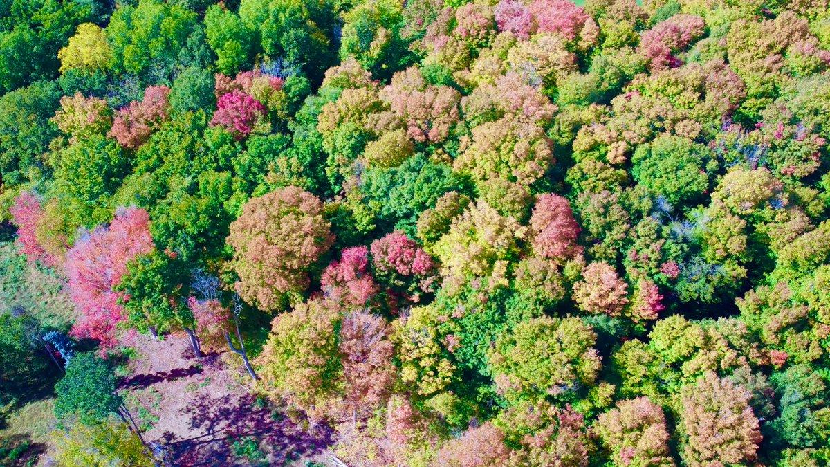 Autumn Colours #drone #uav #uas #rpas #dji #mavicmini #flyasyouare #aerialphotography #autumn #fall #foliage #colours #vellorewoods vaughan #ontario #discoveron #canada #sharecangeo #shotondji #dronestagram #dronedesire #twenty4sevendrones #gameofdrones https://t.co/U3IlReBsOb