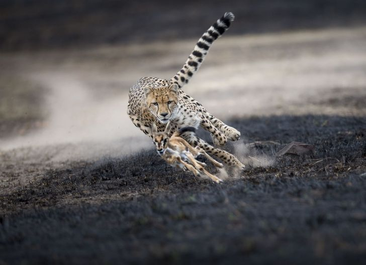 Las mejores fotos de National Geographic en el 2018 📸🏆 #animals #plantas #diadelmedioambiente #siguemeytesigo #repost #nature #paisajes #naturaleza #photography #travel #fotografia #paisajesnaturales #photo #love #instagood #beautiful #personaschistosas #chistes #memes https://t.co/OuxGJP8iOG