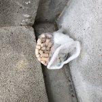 迷子猫を探している方に有益な情報。猫のおしっこの砂を網に入れて家まで導いてみてください。