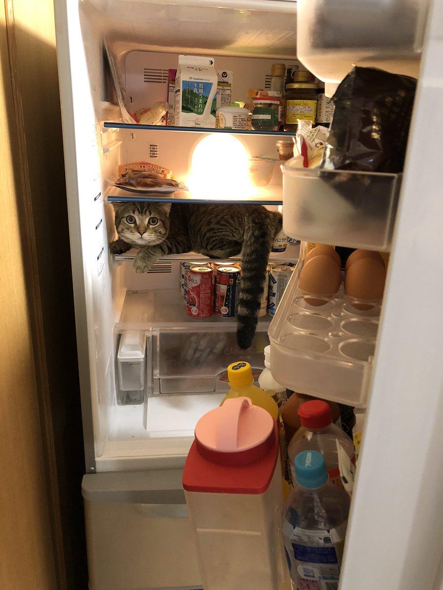 躲到冰箱裡的貓 EjT-EfgVoAA5txZ