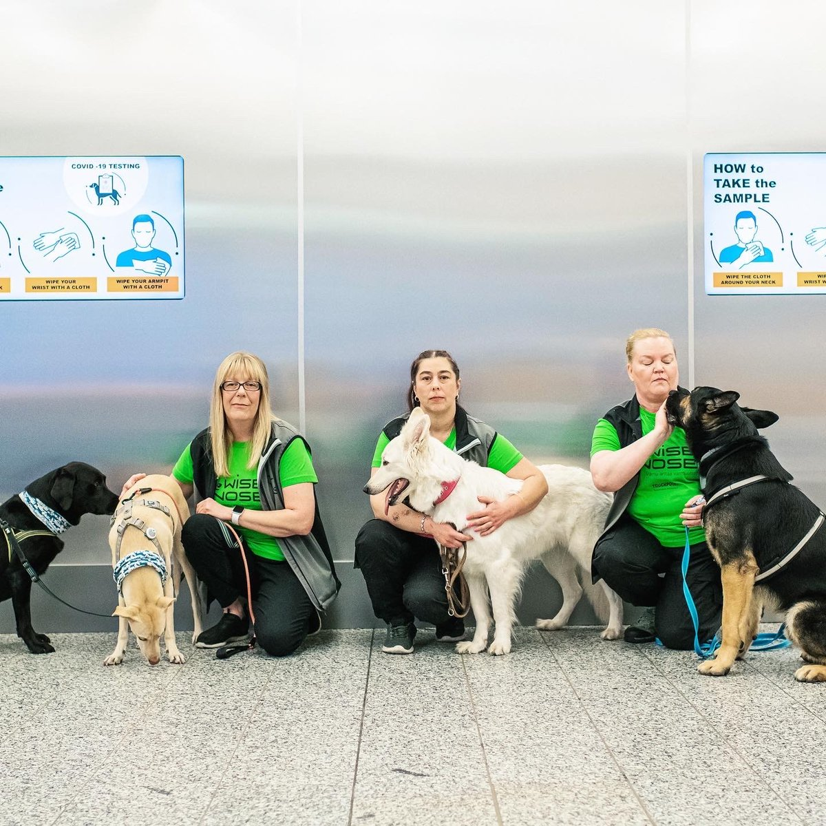 Finnair On Twitter Woof These Cute Covid 19 Dogs Have Started Their Important Duty At Helsinkiairport Detecting Passengers Infected With The Coronavirus Dogs Are Able To Smell The Virus With Almost 100 Certainty